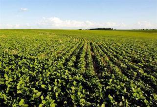 大豆优质栽培技术与病虫防治研究