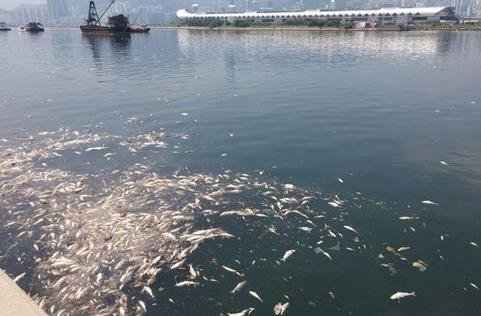 水污染问题