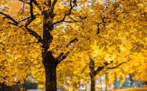 秋天来了作文200字_一处美丽的风景小学生作文200字(精选3篇)